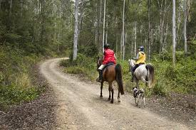 Riding horses in forest